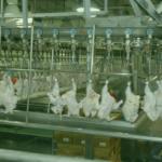 Slaughterhouse Management
